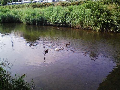 川と鳥3602532321_c6976e2c6e