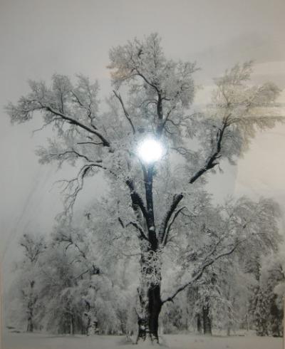 a1雪木5068