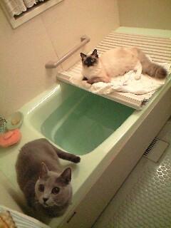 bath080511_0056~0002