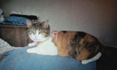 a猫111027_1812~01