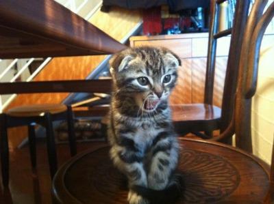 d--子猫の威嚇233365_421273831_n