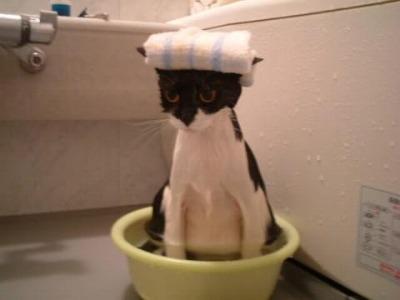 aaa---お風呂ネコ562393542_n