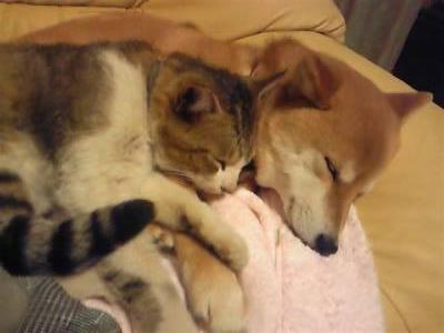 阿仁良さん犬猫