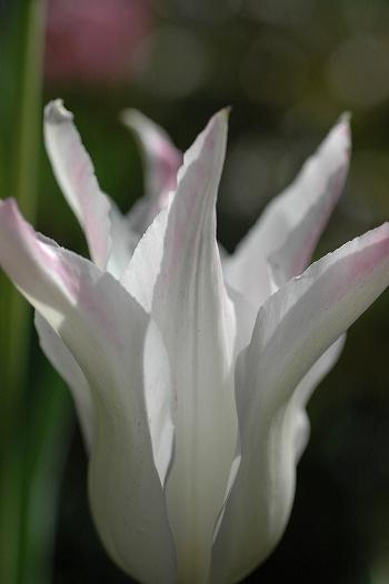 20100416 019