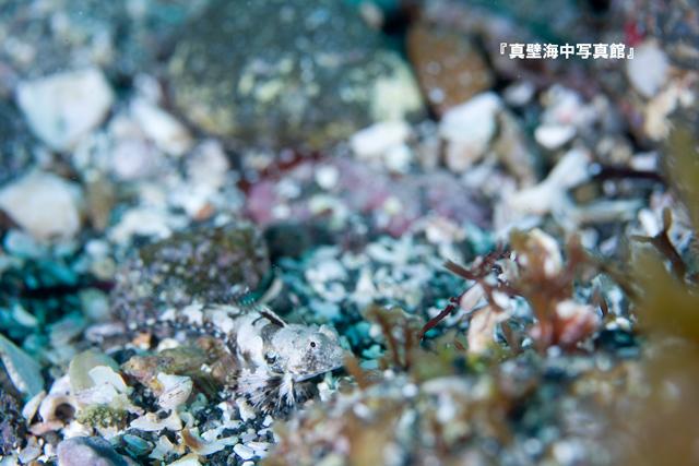 05-1★ヒメテグリ100722_2-05