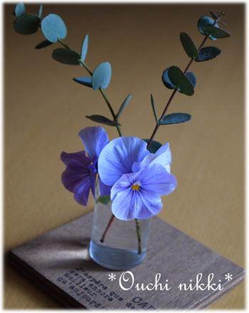 花瓶ビオラ_R
