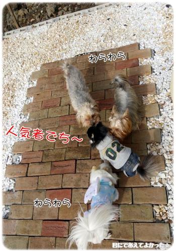 205_20120205194000.jpg