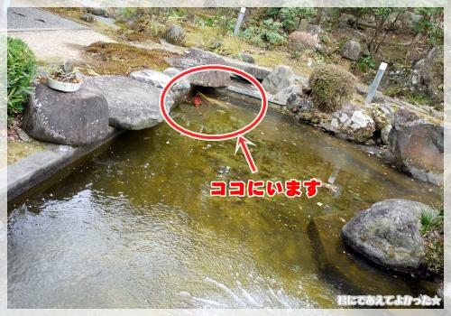 377_20120210213709.jpg