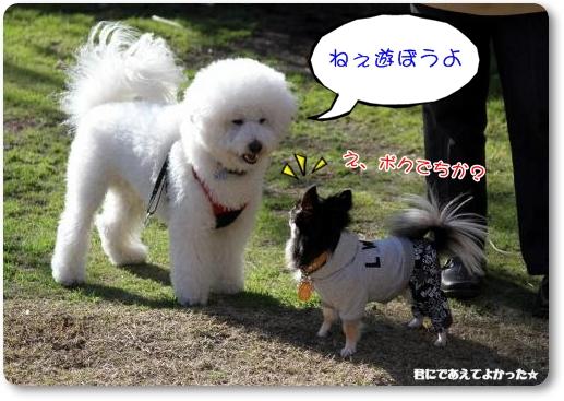922_20111220162627.jpg