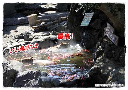 956_20120215135920.jpg