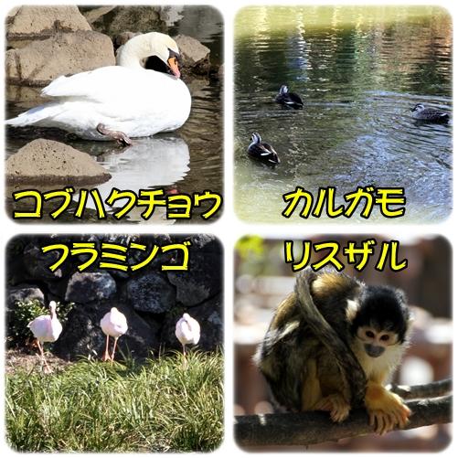 animal4.jpg