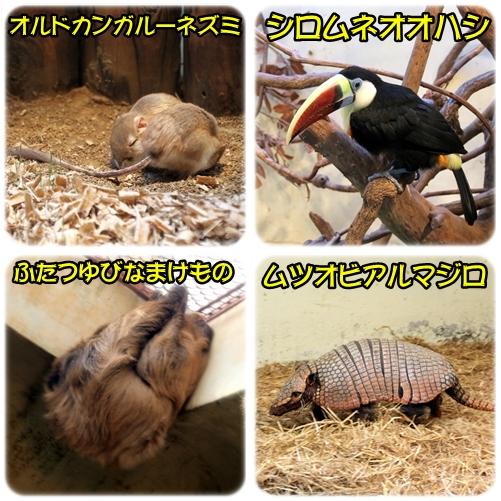 animal5.jpg