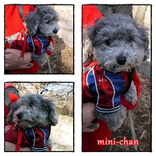 mini-chan.jpg
