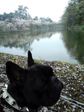 CA3Cre-fukushima8.jpg