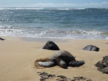hawaii25.jpg