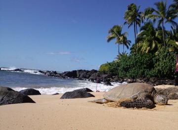 hawaii26.jpg