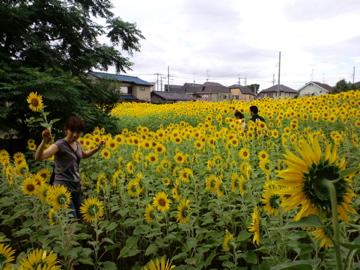 himawari32.jpg