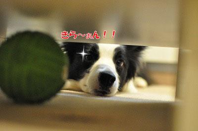 201105-kari02.jpg