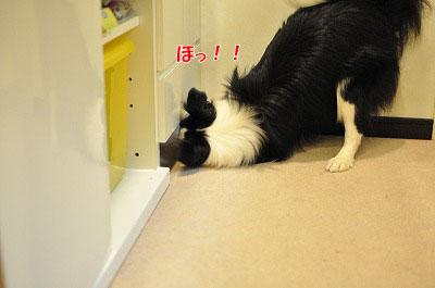 201105-kari03.jpg