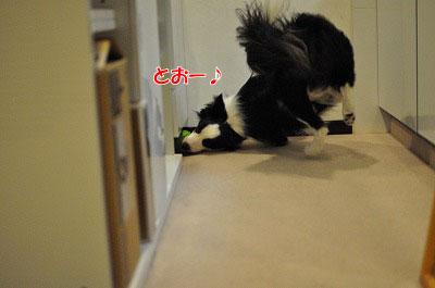 201105-kari04.jpg