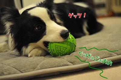 201105-kari05.jpg