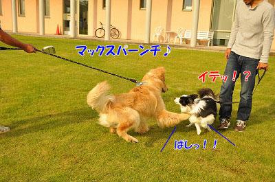 201106-max03.jpg