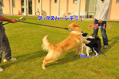 201106-max04.jpg