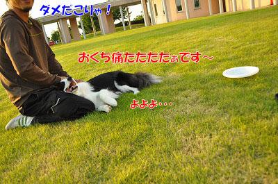 201106-syo01.jpg