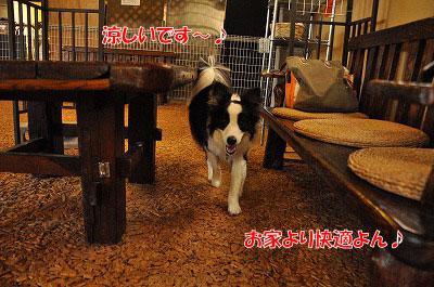 201107-atu01.jpg