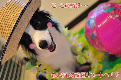 201108-jyu01.jpg