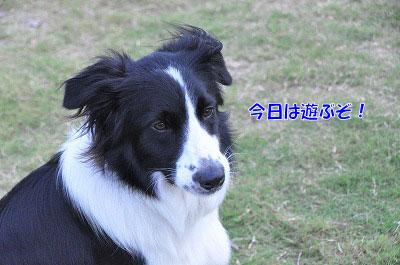 201108-oya01.jpg