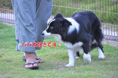 201108-oya02.jpg