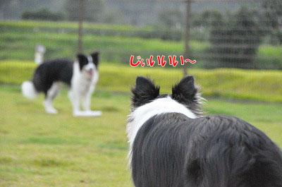 201108-oya07.jpg