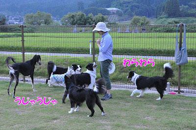 201108-oya10.jpg