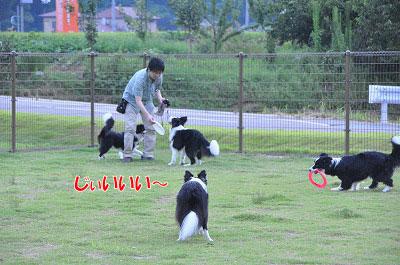 201108-oya12.jpg