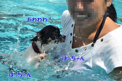 201108w-poo09.jpg