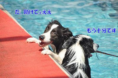 201108w-poo14.jpg