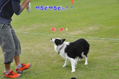 20110925-papa15.jpg