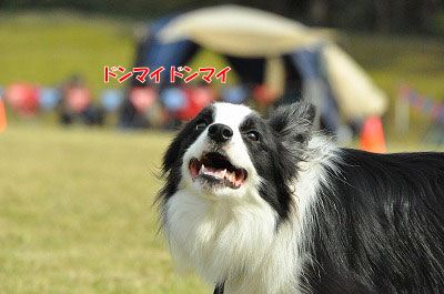 20111016-pap09.jpg