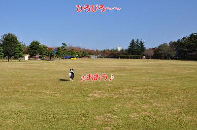 20111104-miy01.jpg