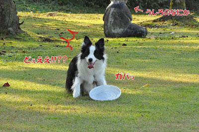 20111104-miy03.jpg