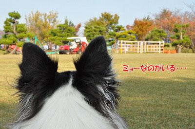20111104-myo01.jpg