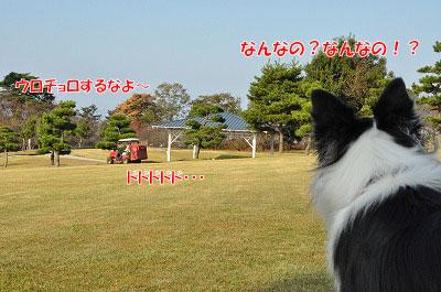 20111104-myo03.jpg