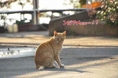 20111104-myo05.jpg