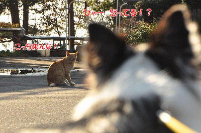 20111104-myo06.jpg