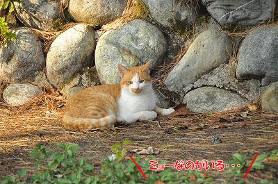 20111104-myo07.jpg