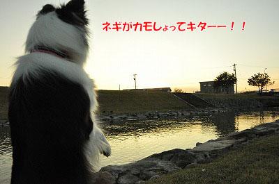 20111128-ho06.jpg