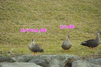 20111128-ho07.jpg
