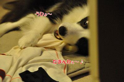 20111206-han03.jpg