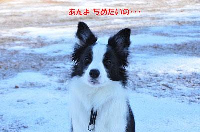 20111211-miy04.jpg